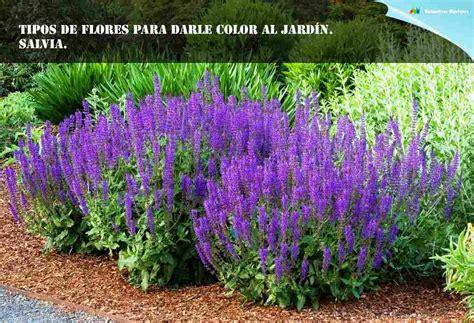 flores de jardin tipos de flores para darle color al jard 237 n piedra