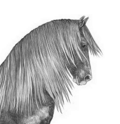 imagenes a lapiz de caballos cuadros modernos pinturas y dibujos cabezas de caballos