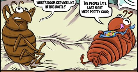 bed bug cartoon corky s noon cartoon by jeremy c joseph end bed bug