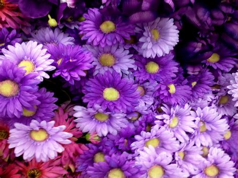 beautiful purple flowers pictures hd images