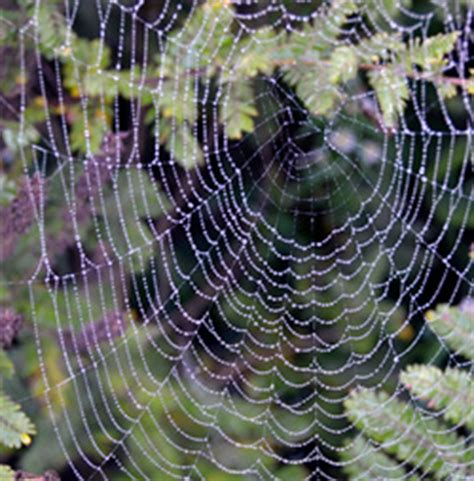 Garden Spider Habits Our Spiders Our Habitat Garden