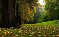 Imagenes De Bosques  Paisajes Naturales Hermosos