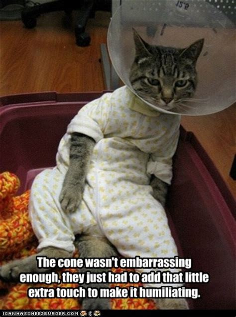 Cone Of Shame Meme - 69 best images about cone of shame on pinterest cats