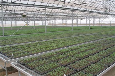 seed bed greenhouse bench seed bed heating system trinog xs
