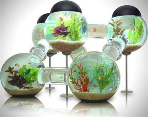 Aquarium Dekorieren Ideen by Die Welt Der Fische Aquarium Kugel Wasserpflanzen Sand