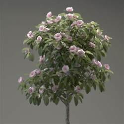 3d model small ornamental tree