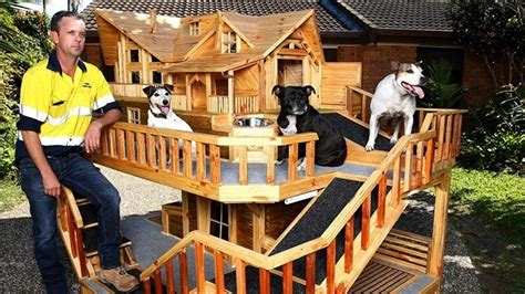 best dogs for inside the house how to build a pallet dog house in a perfect manner