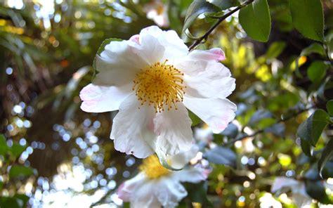 fiori di maggio testo civico20 news barge quot un giorno in fiore quot