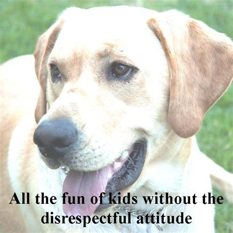 sayings about dogs sayings quotes about humans and dogs quotesgram