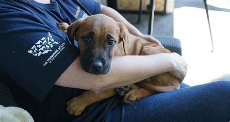 korean rescue central oregon shelter collaboration to rescue korean dogs cascade business news
