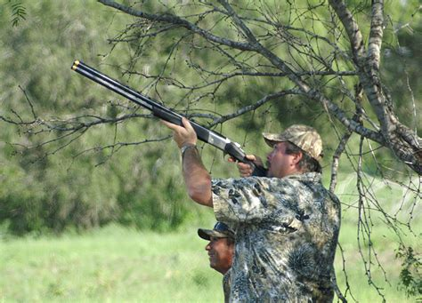 how to a to dove hunt how to dove hunt in the best dove 2017