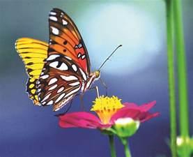 mariposas pics la mariposa mundo poes 237 a foros de poemas