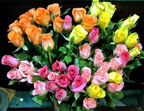 imagenes de flores multicolores ramo de rosas multicolores imagen 3709 im 225 genes cool