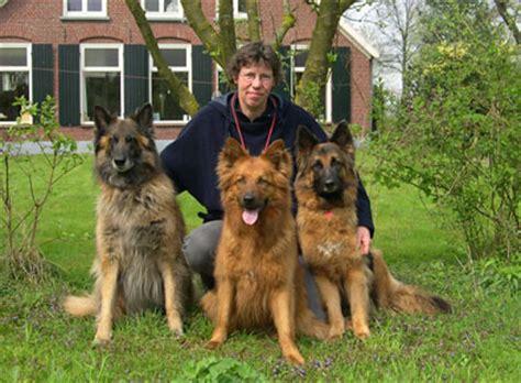 alt deutsche hutte hond der harzer fuchs