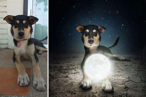 artist creates lovely surreal   shelter dogs
