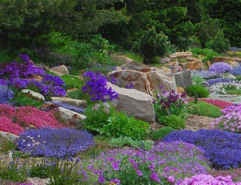 alpine perennials the rock garden companion