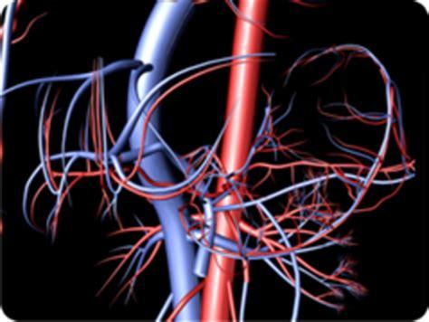 ecocolordoppler vasi spermatici welcome to cro firenze homepage