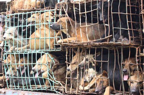 cani in gabbia cani in gabbia la foto giorno corriere della sera