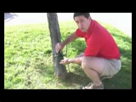 how to put lights on tree outdoor tree lighting professional light installers in sacramento