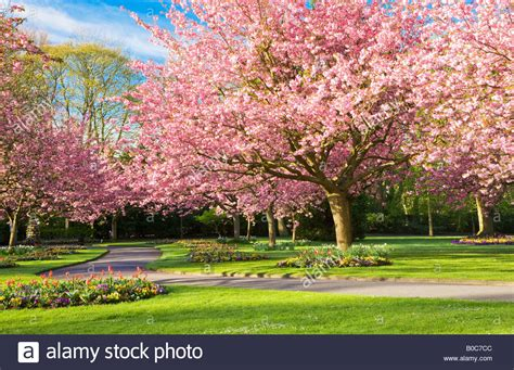 Smiths Garden Town by Flower Beds And Flowering Cherry Trees In The Town