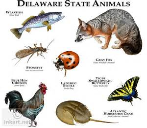 West Virginia State Flower And Tree - state animals of delaware line art and full color