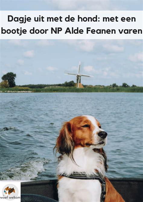 friesland bootje varen met de hond in een bootje nationaal park de alde feanen