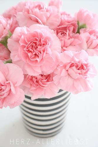 Pink Flower Vases by Pink Flowers Striped Vase Pinpoint