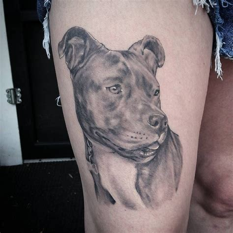 pitbull tattoo awesome top 100 pitbull tattoos http 4develop ua