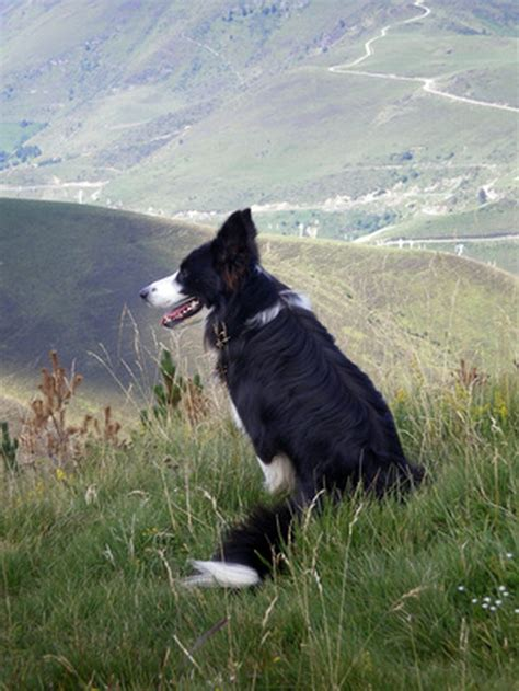 best farm dogs what are the best kinds of farm breeds cuteness