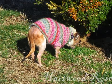 boat dog sweater hartwood roses pattern for winnie s tiny knitted dog sweater