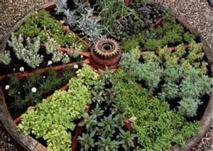 medicinal herbs for wagon wheel herb garden design