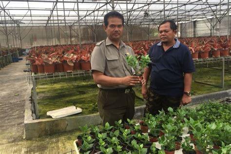 kementan genjot volume ekspor tanaman hias