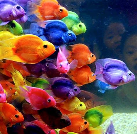 what color are fish color fish image 3088718 by helena888 on favim