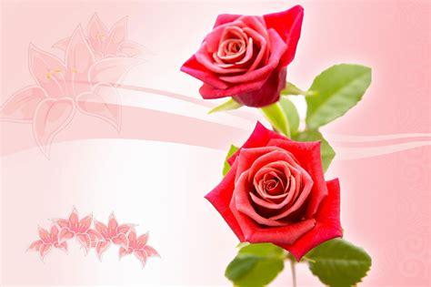 walppar madre bộ h 236 nh ảnh hoa hồng full hd đẹp nhất