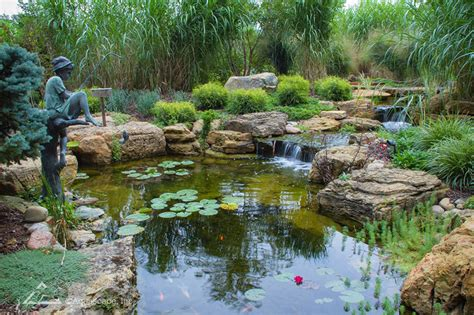 is a backyard pond an ecosystem how a chicago suburbanite transformed their backyard with