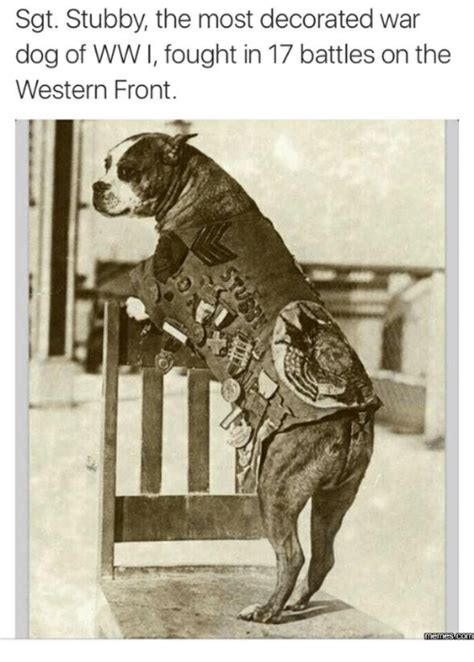 Sgt Stubby Most Decorated War 25 Best Memes About Boxer War Boxer War Memes