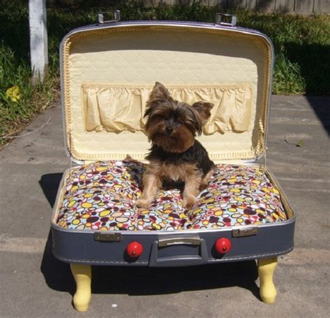 funny dog beds dog beds 35 pictures funny dog dompict com