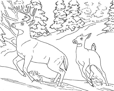 coloring pages wildlife animals free realistic animal coloring pages realistic animal