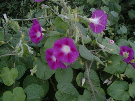 flower gardening tips beginning flower gardening tips garden guides