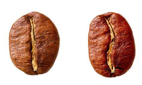 Robusta Coffee new method identifies coffee cut comunicaffe international