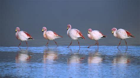 flamingo vans wallpaper download flamingo wallpapers pagina 3 van 3 wallpaper wiki