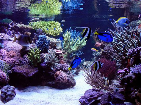 Reef Aquascape by Oregonreef