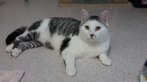 neues zuhause gesucht tierheim wau mau insel sucht neues zuhause f 252 r f 252 nf katzen