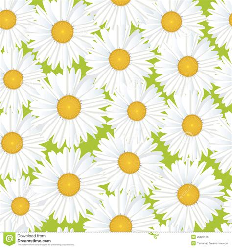 flower pattern white seamless floral pattern with white flowers royalty free