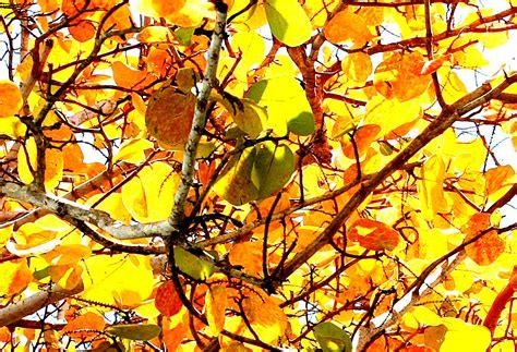 analogous color scheme exles color schemes monochromatic complimentary analogous