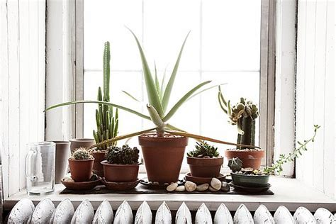 Window Sill Plants Decor Do You Keep Potted Plants On Your Windowsill Popsugar Home