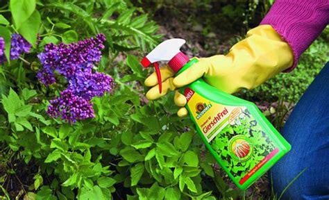 pilze im rasen vernichten 624 giersch bek 228 mpfen pflanzenschutz selbst de