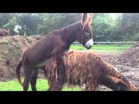 stuten decken pferd decken noriker stute doovi