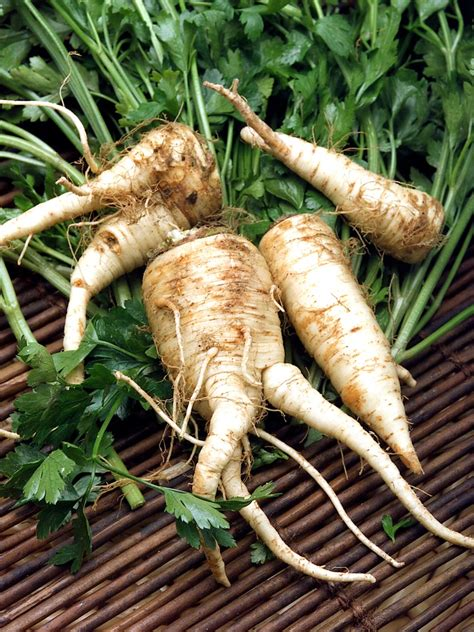 is a carrot a root vegetable 82 best images about s vegetables on