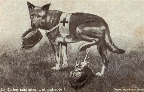 war breeds dogs of war breeds breed dogs spinningpetsyarn